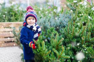 Locally Owned Tree Farm
